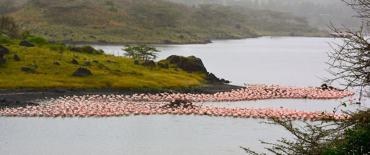 Flamingos at Arusha National Park