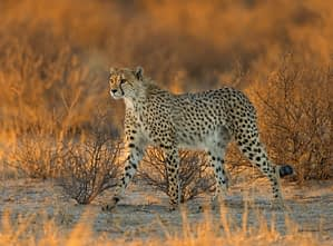 kalahari desert South Africa by Morkel Erasmus